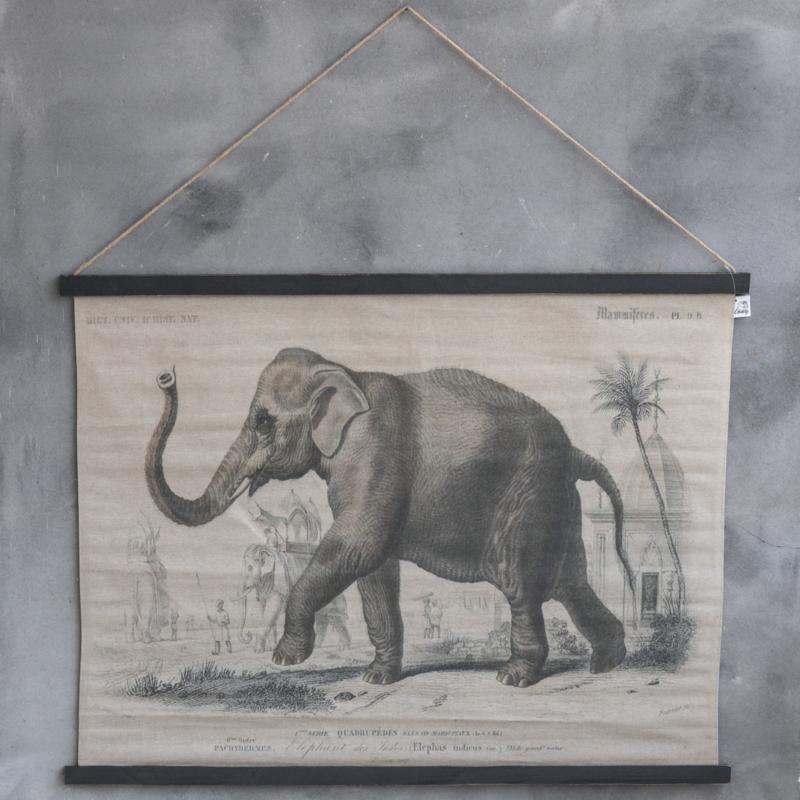 olifant kaart